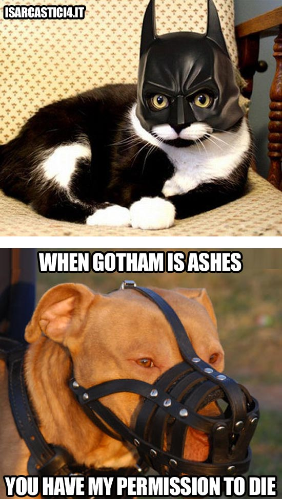 Batman, the dark knight rises - Bane meme